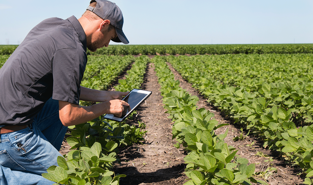 How Can IoT Help In Transforming The Current Agricultural Practices?